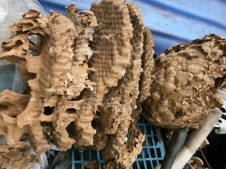 巨大な蜂の巣