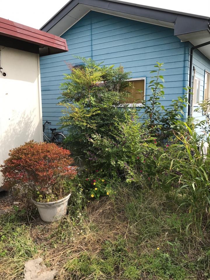 プランターに植えられた植栽