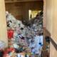 玄関から見たゴミ屋敷の様子